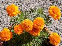 apelsinen på min terrass - apelsinen på min terrass. En vas fylld med lila blommor.