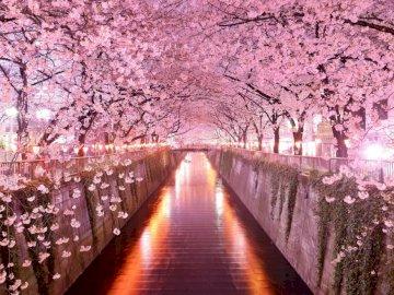 Cherry Blossom - Cherry Blossom ( Sakura) puzzle.