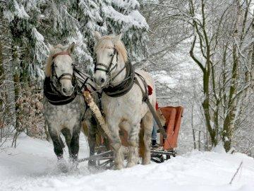 Snieżny zaprzęg - zimowy krajobraz konie sanie. Pies pokryty śniegiem.