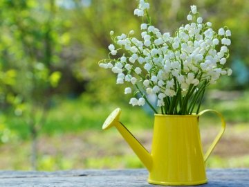 Lilies of the valley in Konewka - Lilies of the valley in a yellow watering can. A vase of flowers on a table.