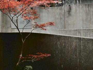 Solitary tree in a artificial - Brown leaf tree near gray concrete wall. A close up of a pond.
