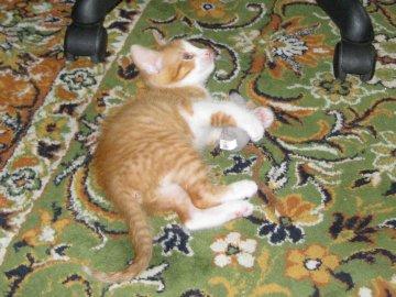 RUDY KOTEK - Mały rudy kotek na dywanie. Kot leżący na dywanie.