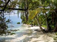 Panama maritime landscape - Caribbean -------------------------------. A tree next to a body of water.