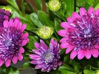 fleurs  - kwiaty