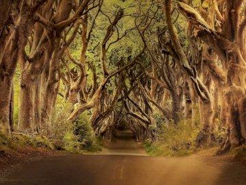 allée de la forêt - route forestière or automne nature. Un arbre sur un chemin de terre.