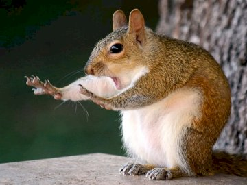 For fun ....... - For fun .......:). A squirrel with its mouth open.