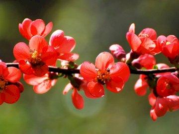 Blumen ............... - Blumen ............... Eine rote Blume.