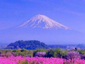 cecha kwiatów - pole kwiatów przed górą. Duży fioletowy kwiat znajduje się na polu z górą Fuji w tle.