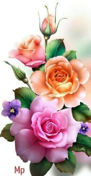Róże do układania.