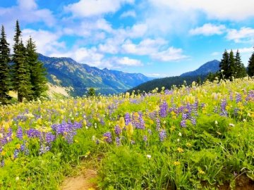 nature - The view from behind the windows of your home. A close up of a flower garden in front of a mountain.