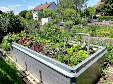 Hochbeet - Hochbeet im Mai 2020. Eine Gruppe von Büschen in einem Garten.