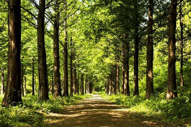 gyönyörű tavaszi erdő - gyönyörű tavaszi erdő. osztályok az erdőről. Egy fa az erdős területen (7×6)