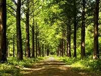gyönyörű tavaszi erdő