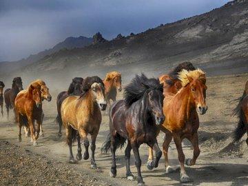 Tabun koni - tabun koni galopuje pośród gór. Stado bydła stojące na polnej drodze.