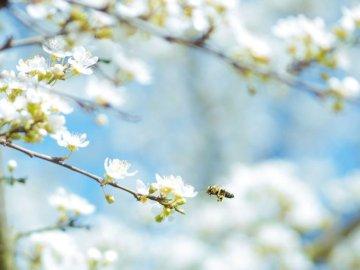 Der Frühling ist gekommen - Zeichen des Frühlings in unserem Garten. Ein Vogel thront auf einem Ast.