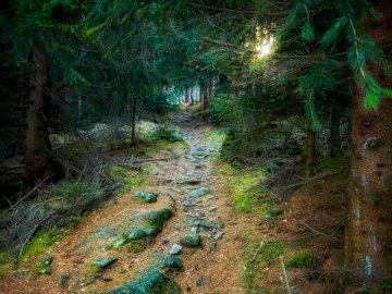 Światło, natura - Ścieżka pokryta mchem. Polska.