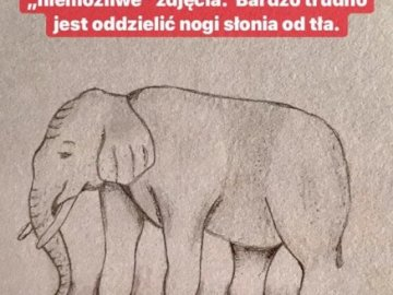 Elephant, how many legs does it have? - Look at the elephant. How many legs. A close up of text on a white background.