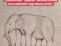Elefant, hur många ben har den?
