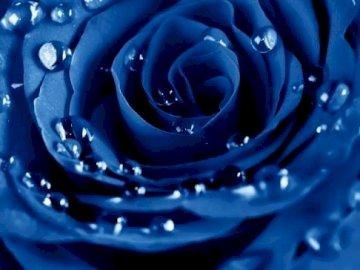 Róża................ - Róża....................