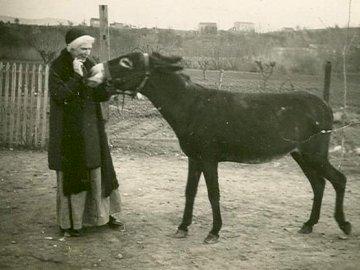 Św. Urszula - Św. Urszula z osiołkiem. Mężczyzna stojący obok konia.