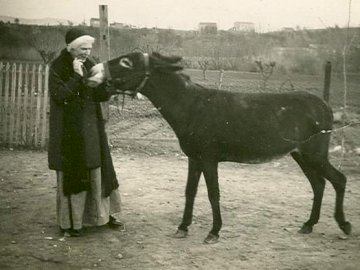 Св. Урсула - Св. Урсула с магаре. Мъж, стоящ до кон.