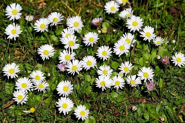 daisies - meadow full of wild flowers. A yellow flower in the grass (3×2)