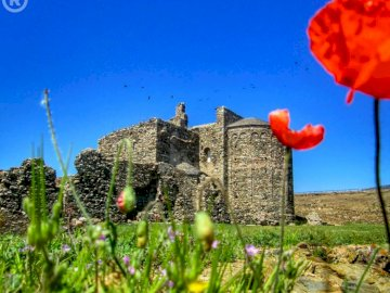 Beautiful nature - Summer, nature, finca, ruin, poppy. A close up of a plant.