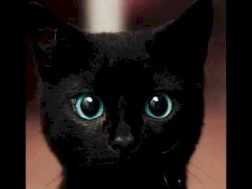 logotipo da ford - A Ford foi fundada 16. 02 1903. Um gato que está olhando para a câmera.