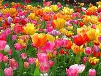 Flores para Corpus Christi - Flores e filhos para Corpus Christi. Um vaso de flores coloridas.
