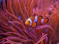 Coral e peixe