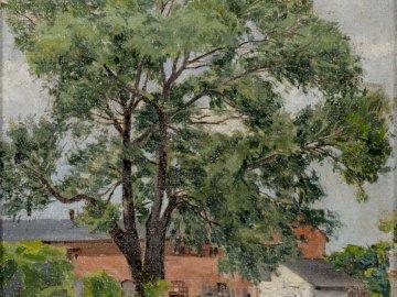 Vecchio salice II - Immagine di Antoni Serbian. Proprietà privata, Ostrów Wielkopolski. Un albero di fronte a una casa