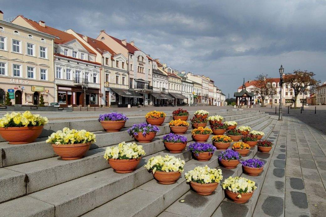 Na Rzeszowskim Rynku - kwiaty Na Rzeszowskim Rynku. Wiązka jedzenia siedzi na szczycie budynku.
