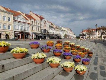 Auf dem Marktplatz von Rzeszów - Blumen auf dem Marktplatz von Rzeszów. Ein Haufen Essen sitzt auf einem Gebäude.