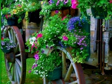 A wagon with colorful flowers - Car with beautiful colorful flowers. A pink flower is in a garden.