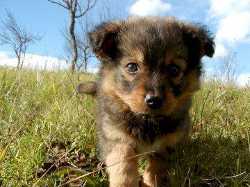 Cariño - quien piensa que es lindo?. Un perro que se coloca encima de un campo cubierto de hierba.
