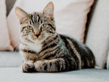 Tomcat tomcat - Fais un chat, beau chat. Set, Go. Un chat gisant sur le sol.