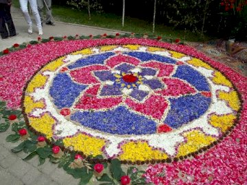 flower rug - A rug made of flowers for Corpus Christi. A colorful rug.