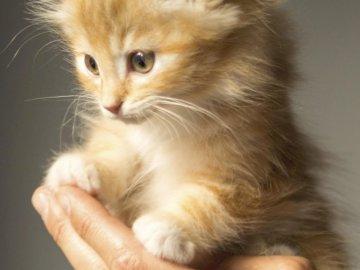 Super gato - gato recogido por una persona. A close up de un gato.