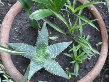 From the Caetana Garden - Photo taken by Caetana of Sala Verde. A close up of a plant.