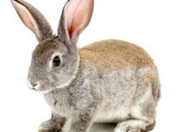 Zdrowe zwierzęta - Dźwięk ich zwierząt dla małych dzieci bardzo małych dzieci.