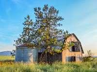 velho celeiro com silo - velho celeiro e silo no Hyw 41. Uma casa com arbustos na frente de um campo verdejante.