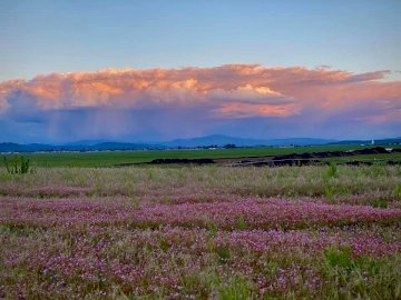 Góra Rathdrum - Rathdrum Mountain i kwiaty. Duże zielone pole z chmurami na niebie.