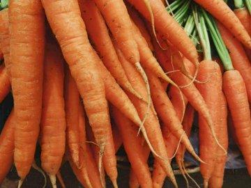 Organic Carrots - Closeup photo of bunch of orange carrots. Pune, Maharashtra, India. A carrot and a knife on a cuttin