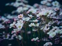 Flores vibrantes