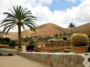 Fuerteventura - A town in Fuerteventura. A palm tree in front of a mountain.