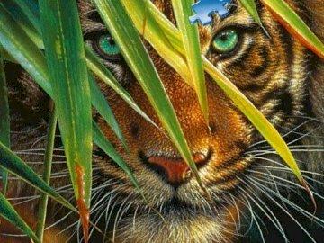 Tygrys bengalski. - Układanka. Zwierzęta: tygrys bengalski. Kot z otwartymi ustami.