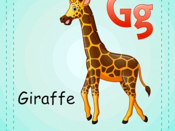 G is for Giraffe - This is a giraffe, is a mammal. It has four legs, his neck is very long. A close up of a giraffe.