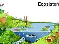 ÖKOSYSTEM - Einer der wichtigsten Ebenen der Organisation von Angelegenheiten.