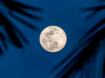 Full moon in blue sky with - Full moon over palm trees.