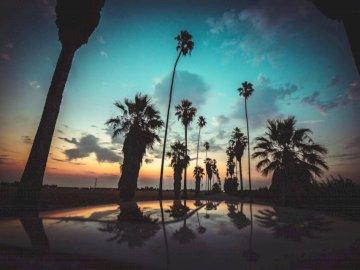 Réflexions matinales - Silhouette de palmiers sur plan d'eau. Manteca Ca. Un palmier devant un coucher de soleil.
